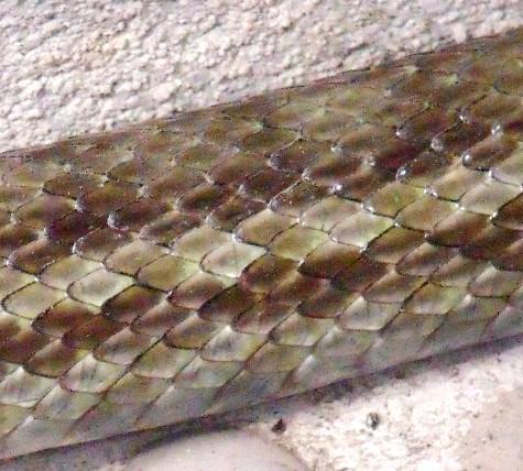 20160401 冬眠ざめの蛇 018-2