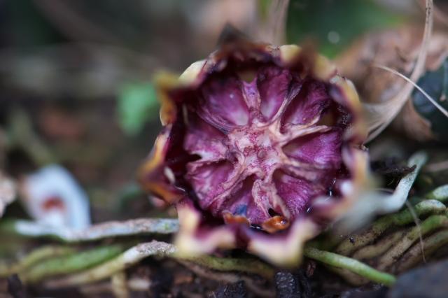 ハランの花-01
