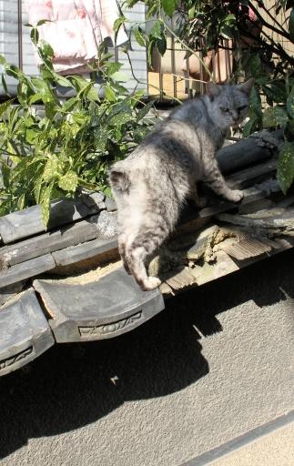 尾道のネコ