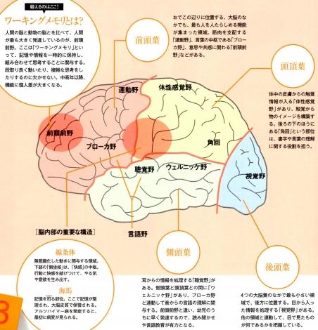 脳の機能分野