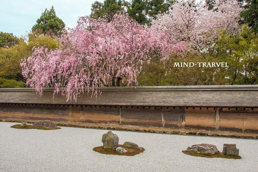 龍安寺 しだれ桜