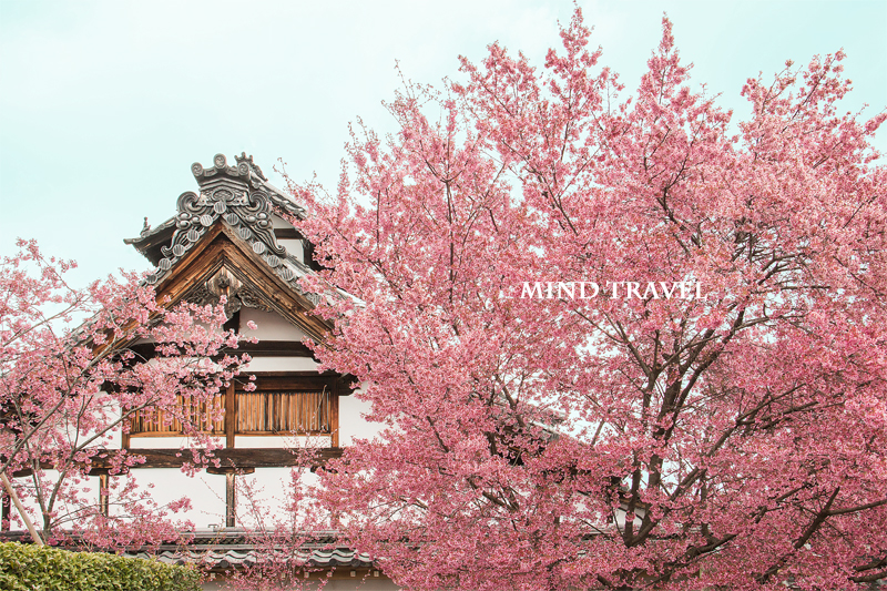 長徳寺 おかめ桜2