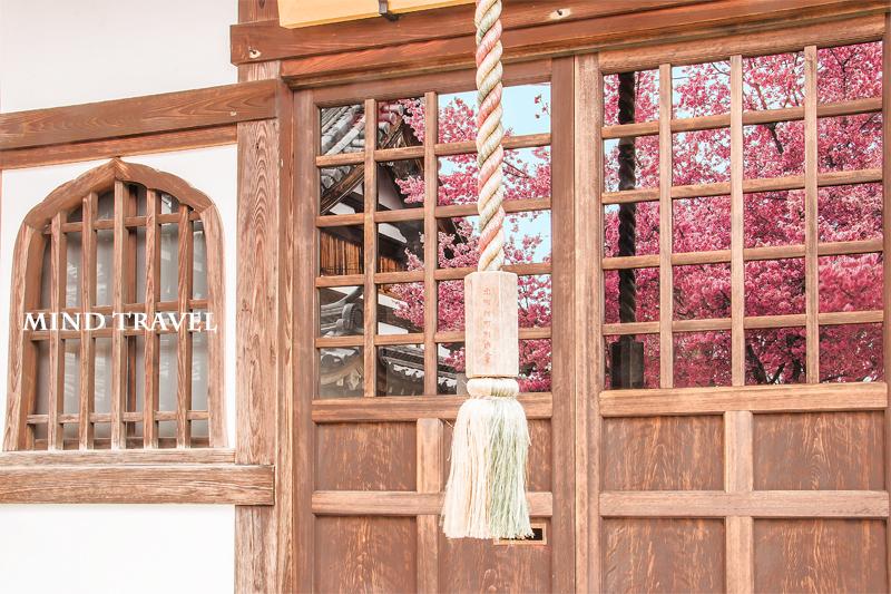 長徳寺 おかめ桜