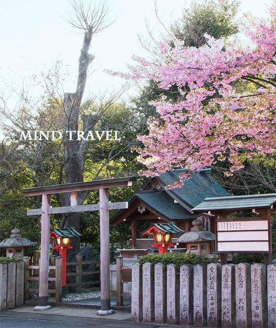 車折神社 桜