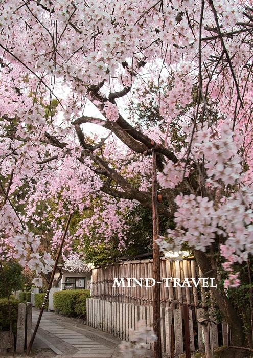 車折神社 溪仙桜