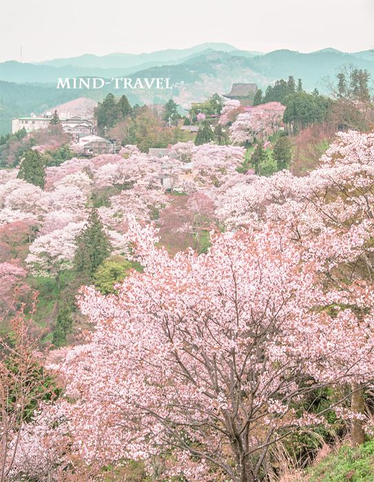 金峯山寺 蔵王堂 桜