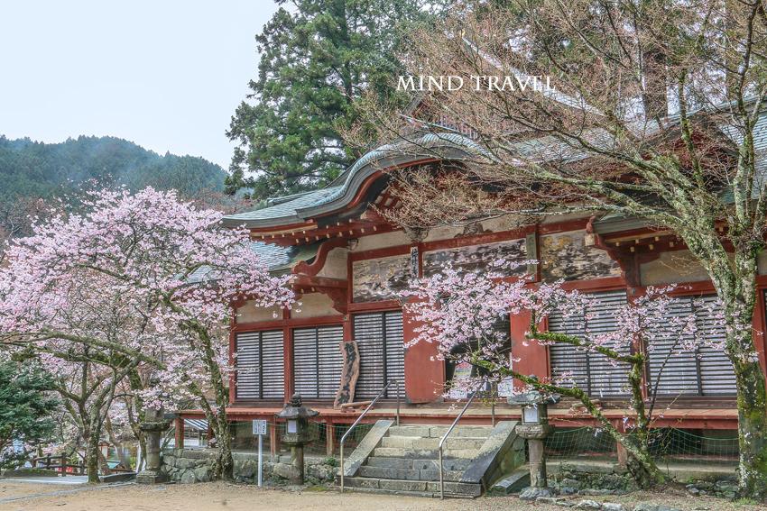 談山神社 桜
