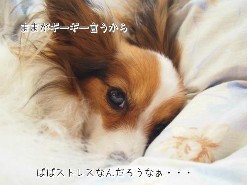 LJ640GOT初夢2