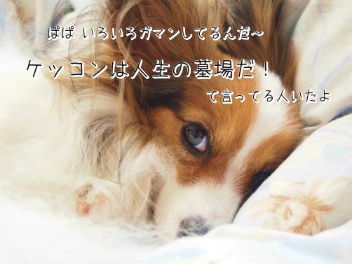 TpZUtxrq初夢4