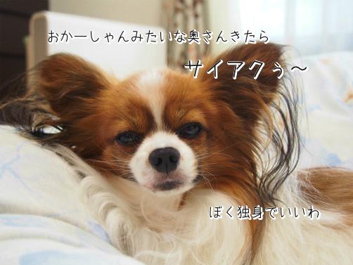 ffw_GfB2初夢5
