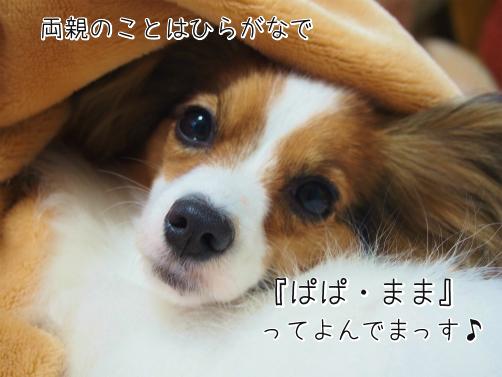 _Ke5UKobしおかえ9