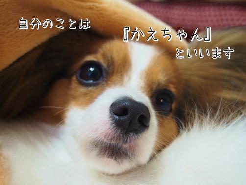 gPdtrzXwしおかえ8