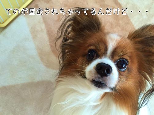 7kEoUZeCたぬき3