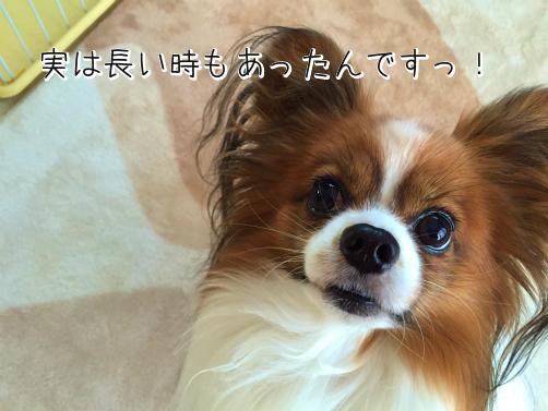 e0YY4z4nたぬき4
