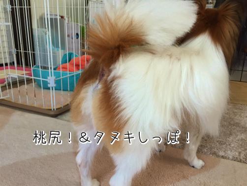 vSb_l5ywたぬき2