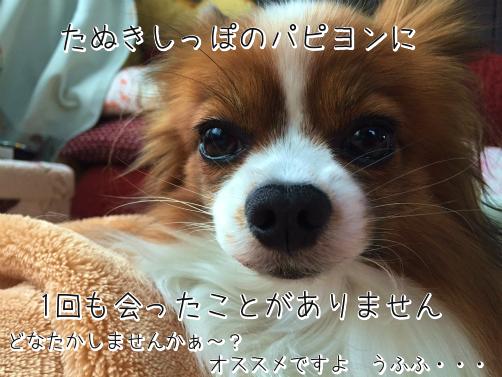 ViSuoXg3たぬき10