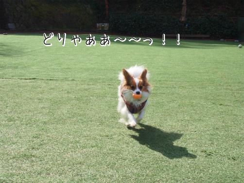HlQBht4hふぃーるど7