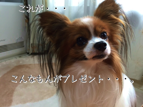 7WZTCO11たんぷれ7