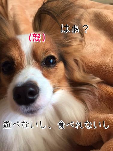 8wlLsAQUかえぷれ6