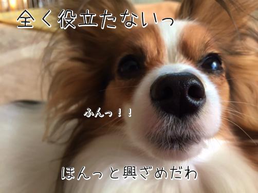 c85fLPs0かえぷれ7