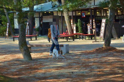 DSC_8329京都オフ3