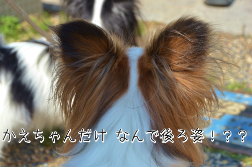 JI5O7BPh京都オフ10