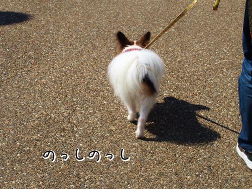 wj707hOJ桜さくさく10
