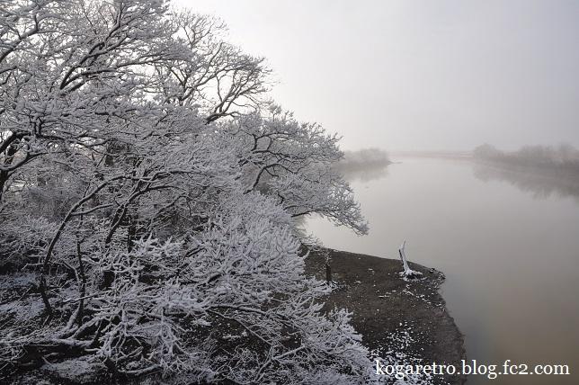 雪の渡良瀬遊水地2