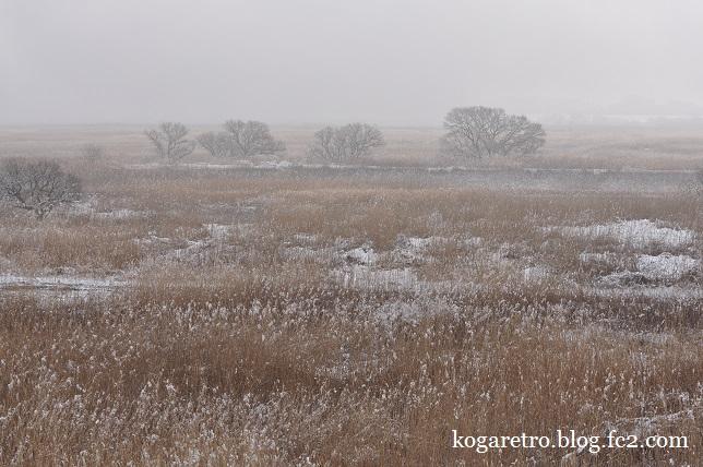 雪の渡良瀬遊水地5