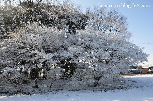 雪の渡良瀬遊水地6