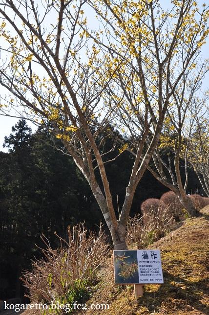 茨城県フラワーパークの春3