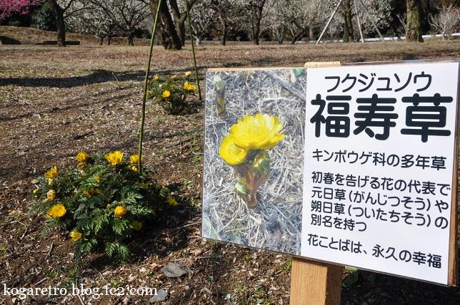 茨城県フラワーパークの春5