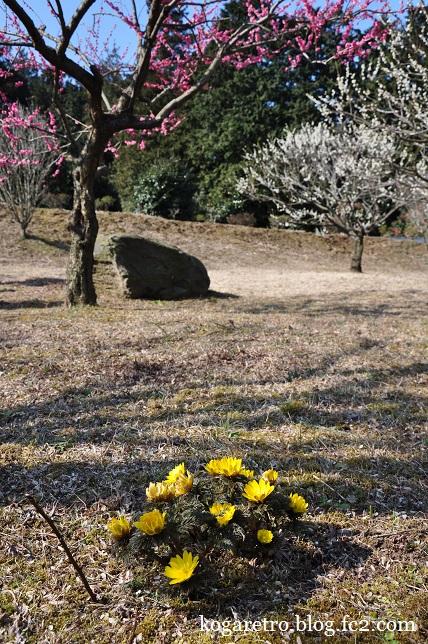 茨城県フラワーパークの春6