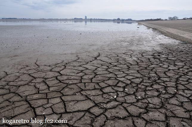 谷中湖の干し上げ(4)