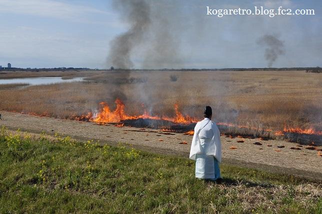 2016渡良瀬遊水地のヨシ焼き3