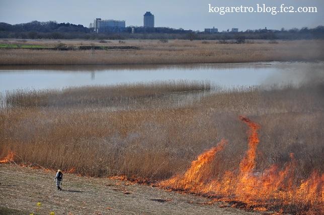 2016渡良瀬遊水地のヨシ焼き5