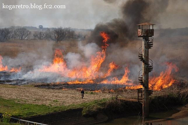 2016渡良瀬遊水地のヨシ焼き8