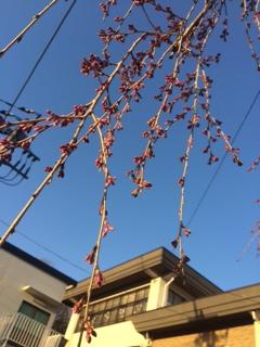 桜3月28日
