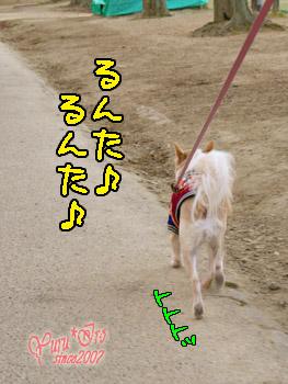 2016yuruiro_0225_k_001