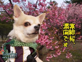 yuruiro2016_0227_k_000