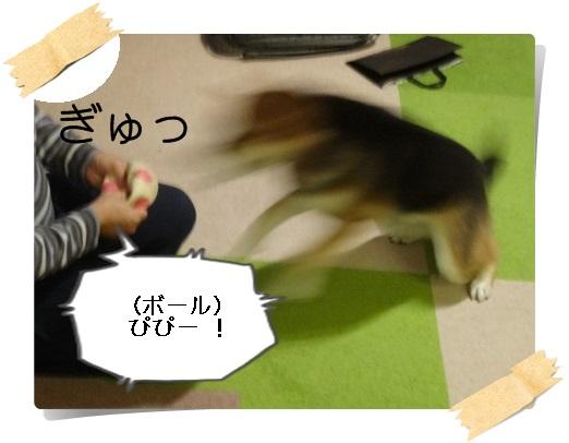 komaro20160109_5.jpg