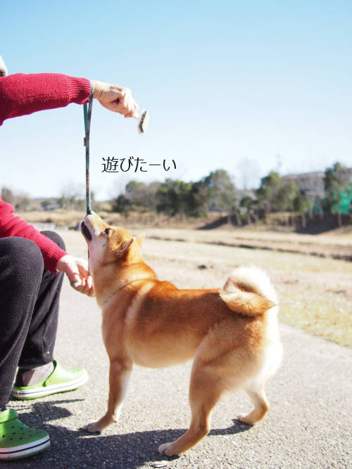 20160226-005.png
