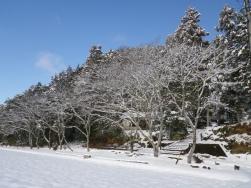 絹丸神社桜並木