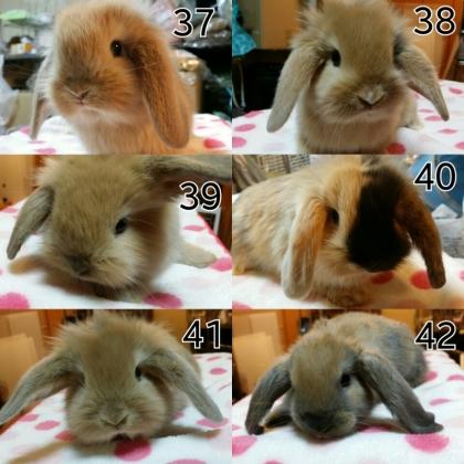 しおはむ 子ウサギ