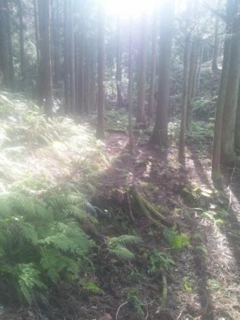 木漏れ日1