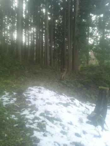 木漏れ日誕生日