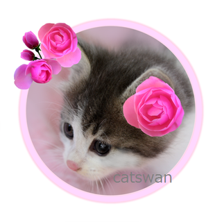 catswan_frame_flower_cat_pink_320x320.png