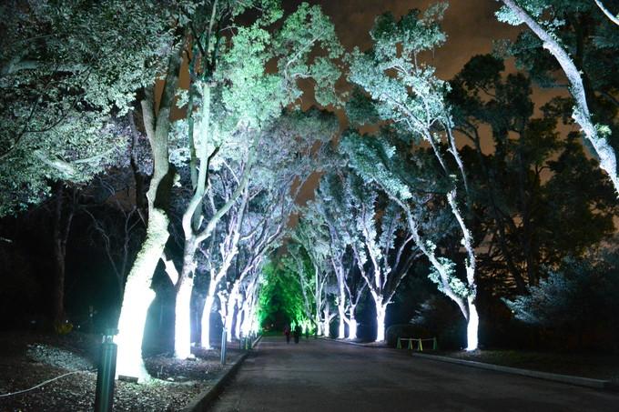 20151218植物園イルミ