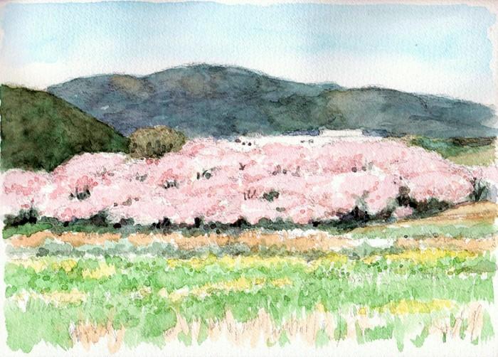 背割堤桜遠望 (700x502)