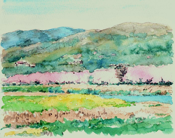 背割堤の桜 (700x551)